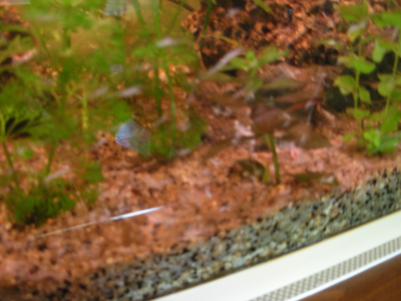 invasion d'algue Dscn2911