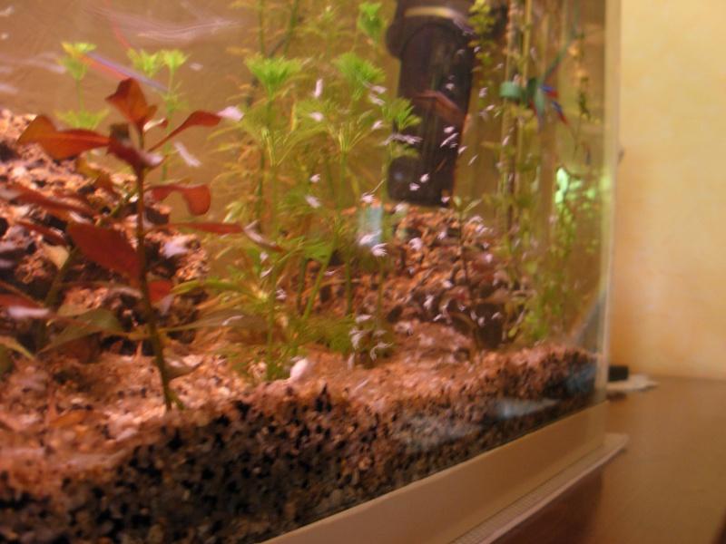 invasion d'algue Dscn2912
