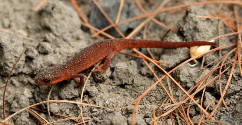 Salamandre! Img_0711