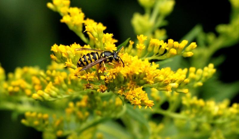 Jaune sur jaune Img_0915