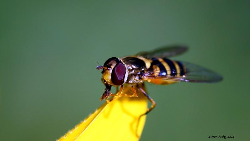 Maya l'abeille Img_2110