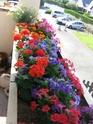 Mon balcon.  Img_1110
