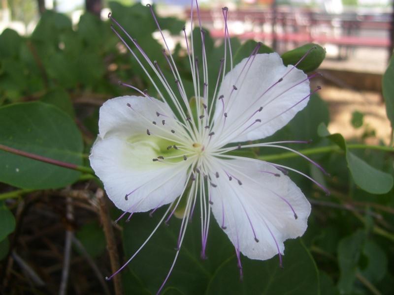 le piante del mio giardino Fiori_10