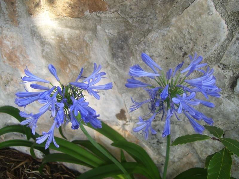 le piante del mio giardino Fiori_11