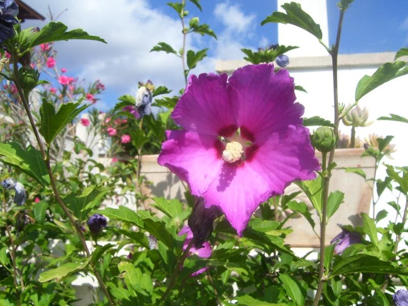 le piante del mio giardino Fiori_12
