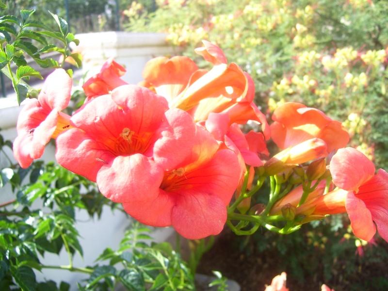 le piante del mio giardino Fiori_15