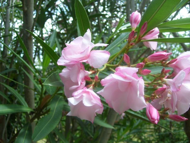 le piante del mio giardino Fiori_18
