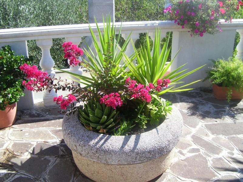 le piante del mio giardino Fiori_19