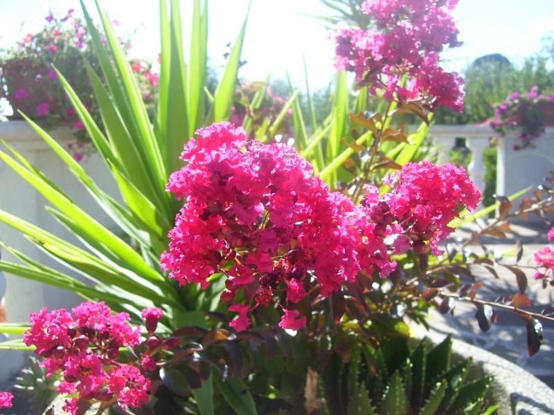 le piante del mio giardino Fiori_20