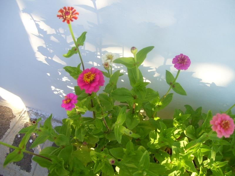 le piante del mio giardino Fiori_22