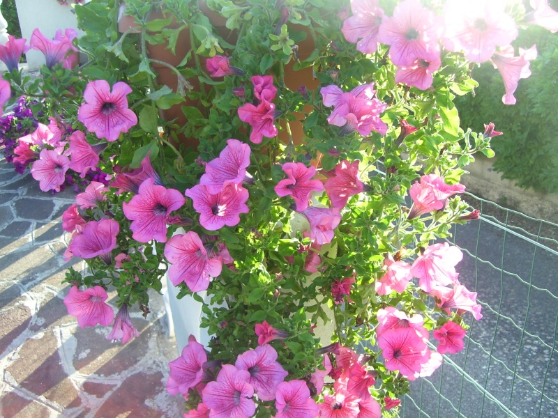 le piante del mio giardino Luglio10