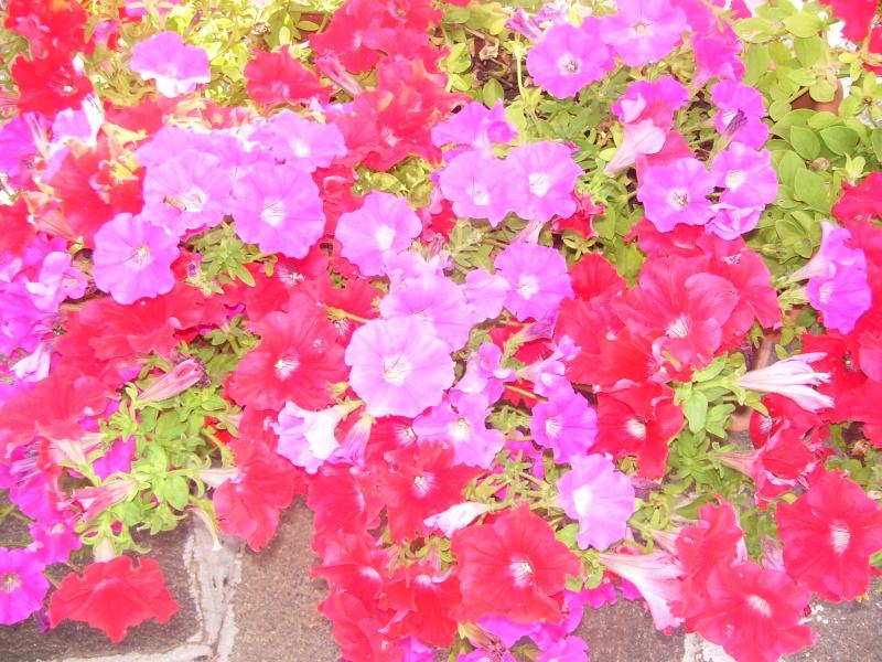 le piante del mio giardino Luglio11