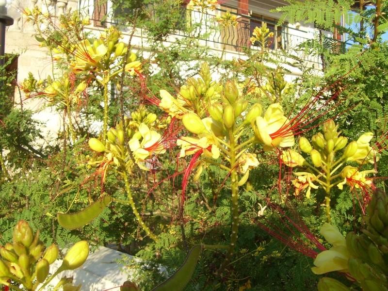 le piante del mio giardino Luglio12