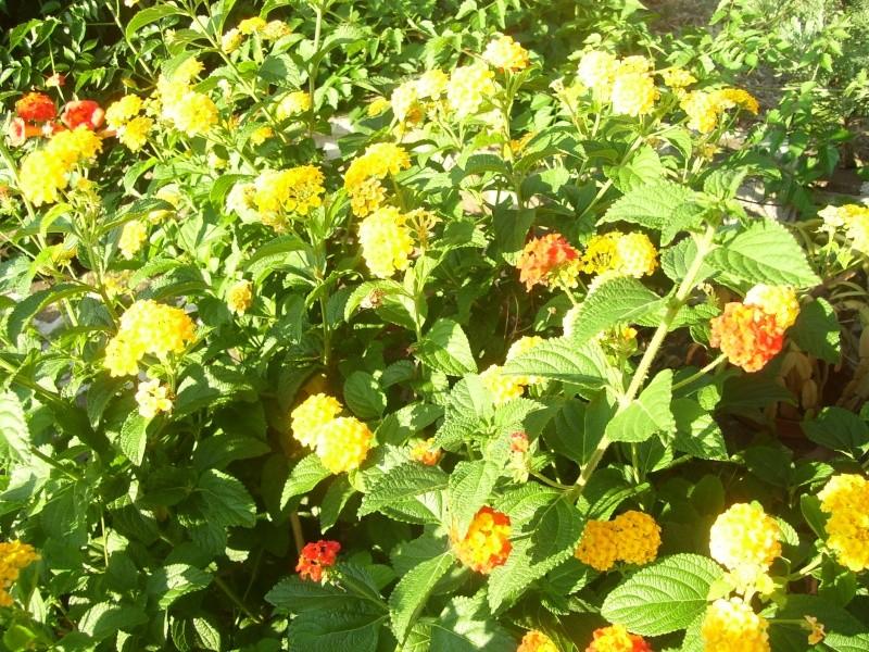 le piante del mio giardino Luglio13