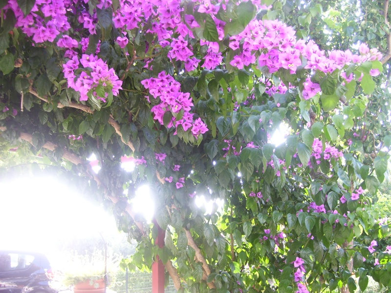 le piante del mio giardino Luglio14
