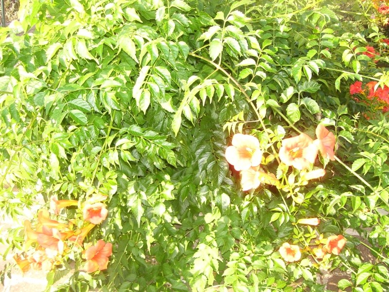 le piante del mio giardino Luglio15