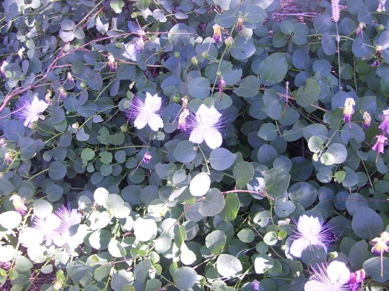 le piante del mio giardino Luglio18