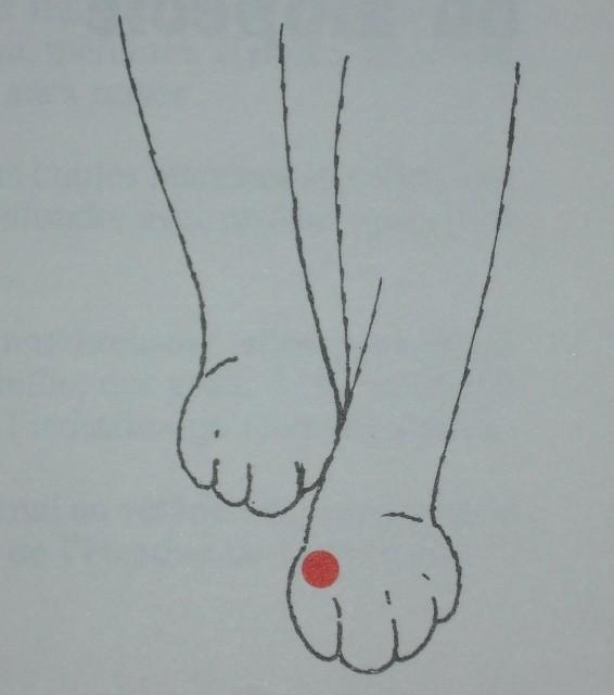 Acupuncture sur animaux domestiques Perte_11