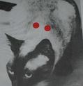 Acupuncture sur animaux domestiques Eczama11