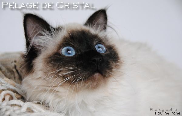 Lune de Cristal Signa10