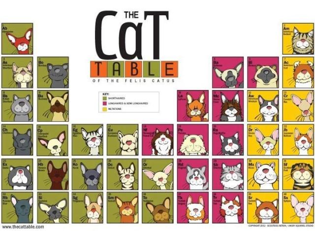 Les races de chats Img_1510