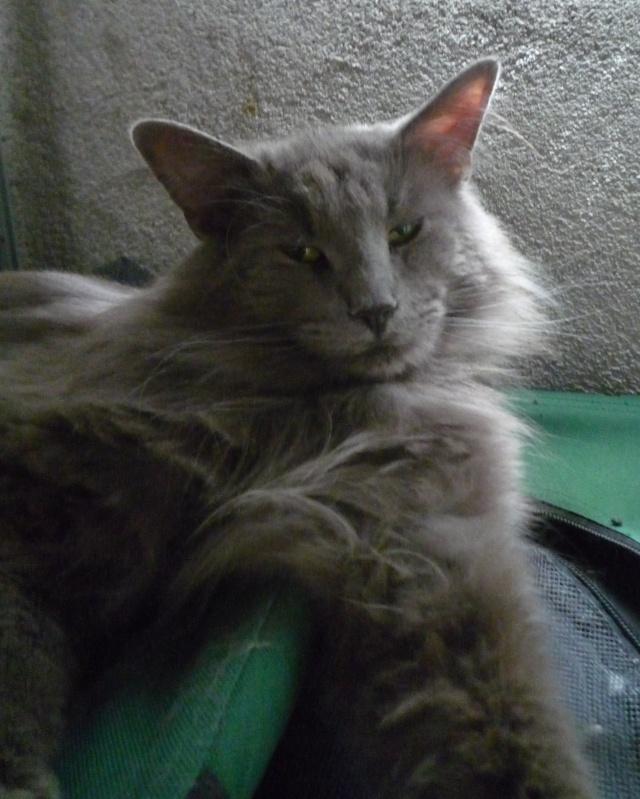 présentation de la tribu du cat sitting - Page 2 P1030614