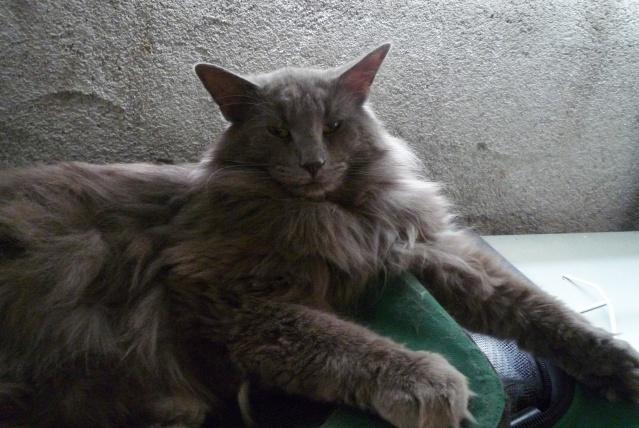 présentation de la tribu du cat sitting - Page 2 P1030615