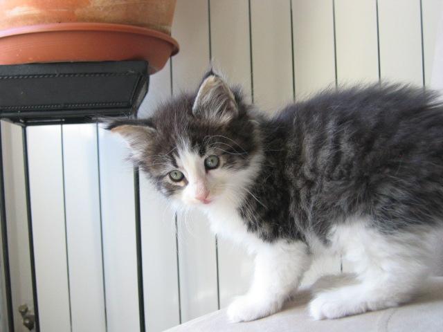 Portée Charmeur et Erendis née le 13 juin 2010 - Page 5 Photos12