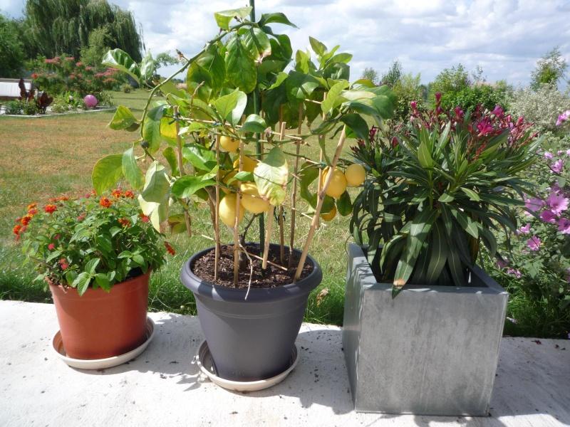 mes jolis petits coins de jardin ! P1020918