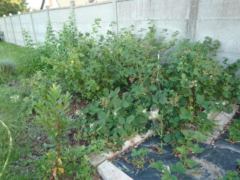 mes jolis petits coins de jardin ! P1020920