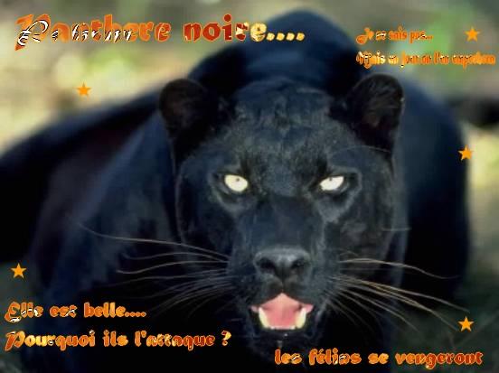 Feli's Créa !! Panthe10