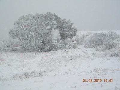 Il Sud America nella morsa del gelo Neve310