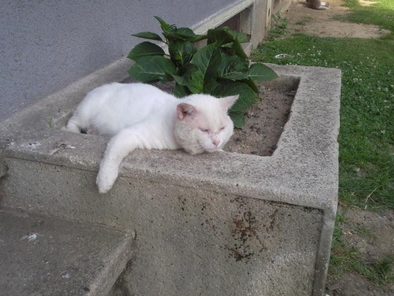 neige le chat errant  Neige11
