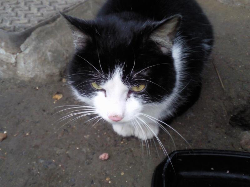 SOS chat errant dans le 59 Photo121