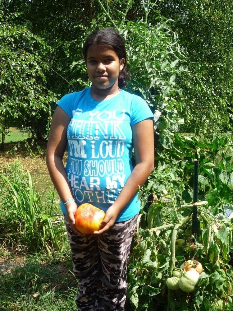 My bragging tomatoes -(Boffer, beware) 00413