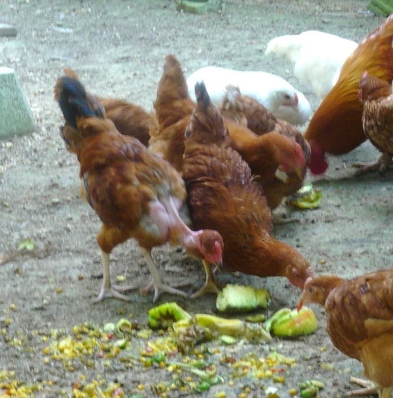 New chicks 00711