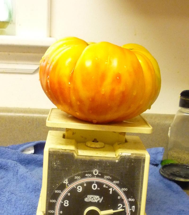 My bragging tomatoes -(Boffer, beware) 00714