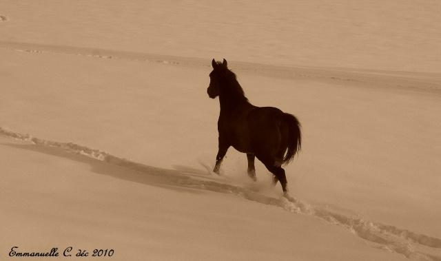 Concours Photo Février : Votre Plus Belle Photo Cheval11