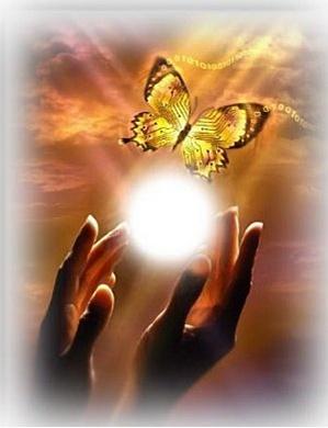 douce pensee pour toi petit papillon Envole10