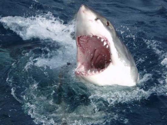 TEAM-THE SHARKS