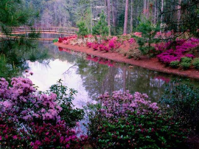 Le jardin Jardin13