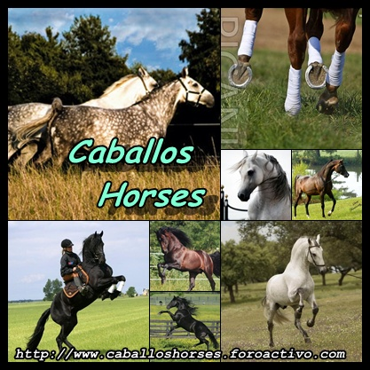 Caballos Horses