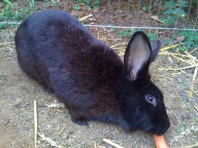 CERISE adorable lapine Img_0011
