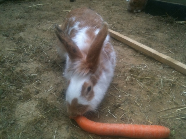 MANDARINE - Adorable lapine Photo10