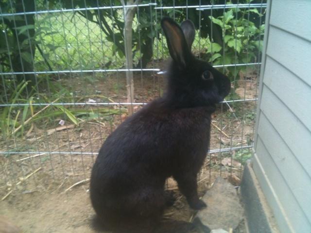 CERISE adorable lapine Photo_14