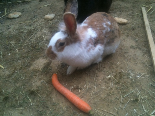 MANDARINE - Adorable lapine Photo_19