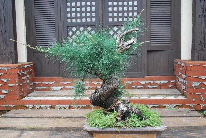 Aussy Pine Update Dsc_0150