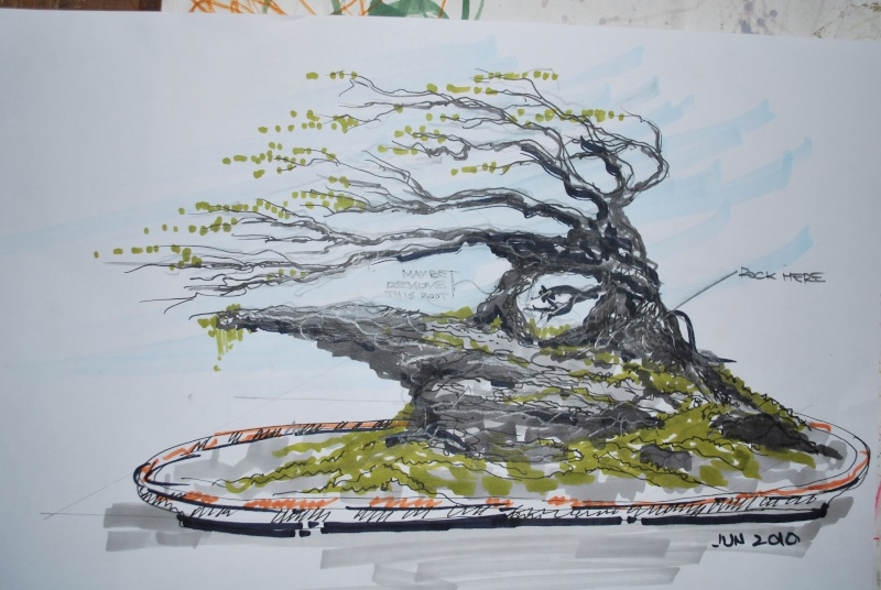 actual tree/ proposed penjing drawing Dsc_0212