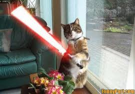 Funny Star Wars Pictures Funnys12