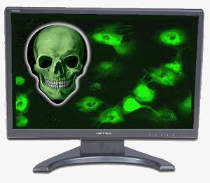 Antivirus Software: Do You Really Need It? 20100810
